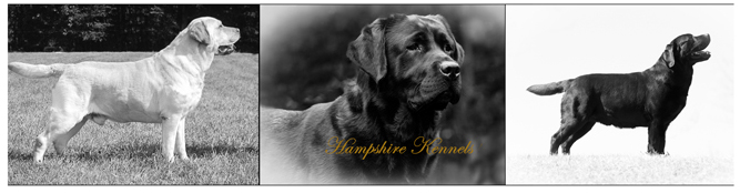 hampshireKennels_homeImg